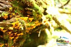 Лисички Бадукские озера